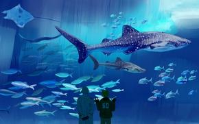 Picture aquarium, shark, anime, large, art, SKAT, observation, sea, Oceanarium, axis powers hetalia and axis countries, …