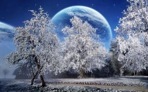 Wallpaper trees, planet, snow, winter