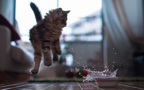 Picture water, bowl, kitty