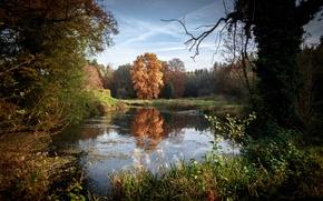 Picture Nature, Autumn, Trees, Ozero