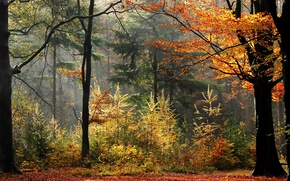 Picture autumn, forest, trees, fog, plants, forest, trees, Autumn, leaves, fog, fall