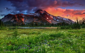Wallpaper the sky, mountain, meadow, flowers.grass