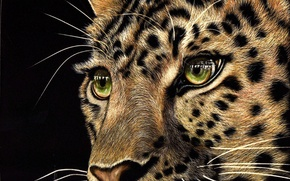Picture look, face, animal, predator, leopard, black background, green eyes
