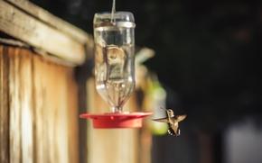 Picture background, bird, feeder
