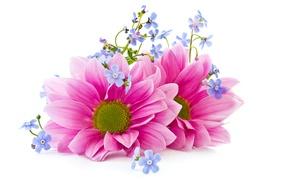 Picture flowers, petals, flowers