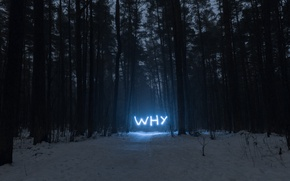 Picture forest, why, neon