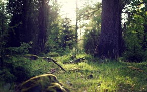 Picture greens, grass, light, trees, nature, trunks, Forest, the bushes