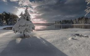 Wallpaper tree, lake, snow, winter