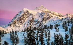 Picture winter, forest, the sky, sunset, the evening, pink, USA, resort, North America, Washington, January, Mountain …