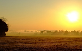 Wallpaper field, the sun, fog