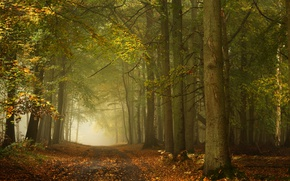 Wallpaper road, autumn, forest, trees, England, England, Ashridge Wood, Forest Ashridge, Berkshire, Berkshire