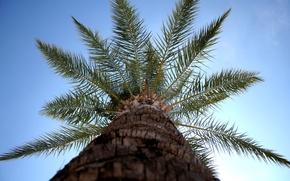 Picture Sky, Blue, Green, Tree, Sun, Turkey, Brown, Lara, Palm, Vacation, Trunk, Tropics