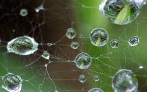 Picture leaves, drops, Web