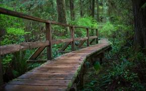 Picture forest, rain, the bridge, rain, bridge, Forest