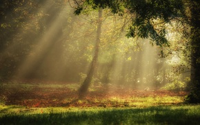 Wallpaper light, forest, trees, nature, autumn