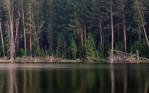Picture forest, trees, lake