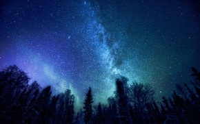 Picture forest, space, stars, trees, The Milky Way, mystery