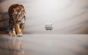 Picture tiger, reflection, Apple
