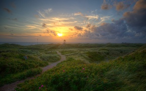 Picture sea, the sky, grass, the sun, clouds, flowers, dawn, coast, Denmark, horizon, Jutland