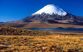 Wallpaper mountain, Chile, snow, South America, antelope, top