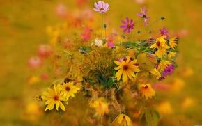 Picture autumn, bouquet, petals, stem