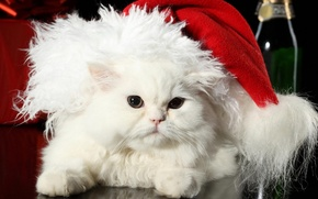 Wallpaper cat, holiday, white, pers, hat, fur, new year, fluffy, Santa Claus, wool, cat