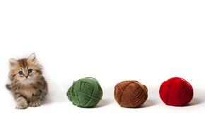 Wallpaper cat, tangle, kitty, white background, balls, Daisy, Ben Torode, yarn