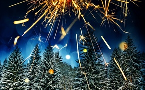 Picture winter, forest, snow, trees, night, lights, glare, holiday, tree, salute, New year, fireworks