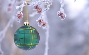 Picture frost, toy, new year, ball, Christmas, branch, fruit, decoration