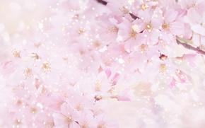 Wallpaper flowers, nature, cherry, pink, spring, petals, Sakura, flowering