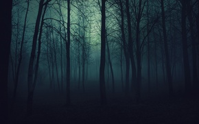 Wallpaper trees, fog, darkness, Forest