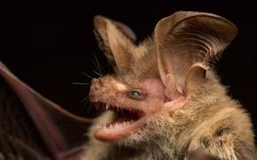Picture Australia, Gladstonos Gould, view gladstonos bats