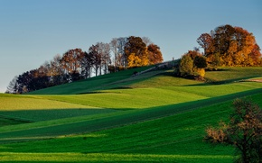 Picture field, the sky, grass, trees, sunset, hills, shadow