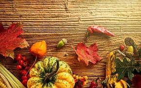 Picture autumn, leaves, berries, tree, corn, harvest, pumpkin, pepper, acorns
