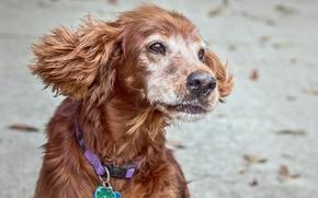 Picture dog, pet, supermodel
