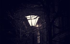 Picture Night, Peter, Lantern, Saint Petersburg, Viper, Tree Branches, Night Peter, Street Lamp, Night city