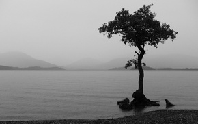 Picture lake, tree, black and white