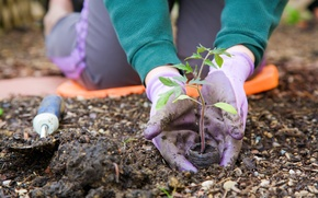 Picture earth, garden, gloves, plant a tree