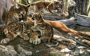 Picture cat, predator, kittens, Puma