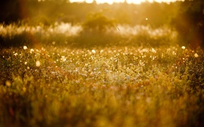 Picture summer, the sun, nature, background, glade, plants, blur, grass, flowering, wallpapers