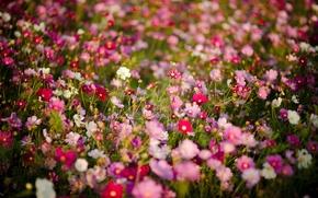 Picture flowers, petals, a lot, different