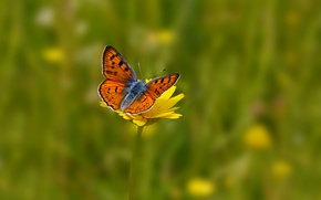Picture field, flower, flowers, yellow, background, butterfly