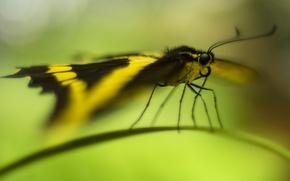 Wallpaper bokeh, butterfly, a blade of grass
