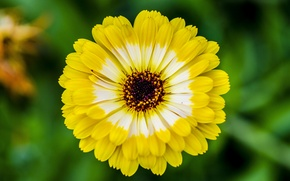 Picture greens, flower, summer, macro, yellow, mood, bright
