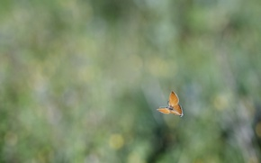 Wallpaper blur, butterfly, glare, flight, background