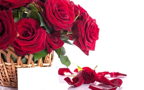 Picture basket, romance, roses, petals, red, flower, beautiful, beautiful, Roses, lovely, Petals
