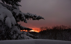 Picture winter, the sky, snow, trees, sunset, the evening