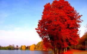 Picture road, autumn, leaves, trees, the city, lake, pond