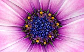 Wallpaper Flower, Pollen, Violet