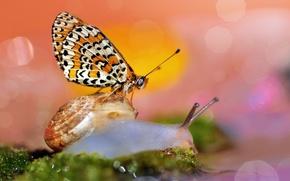 Picture macro, butterfly, snail, bokeh
